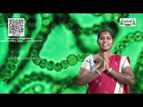 11th Microbiology நுண்ணுயிரிகளின் உணவூட்டமும் வளர்ச்சியும் அலகு 6 பகுதி 1 Kalvi TV
