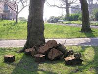 trees weston park
