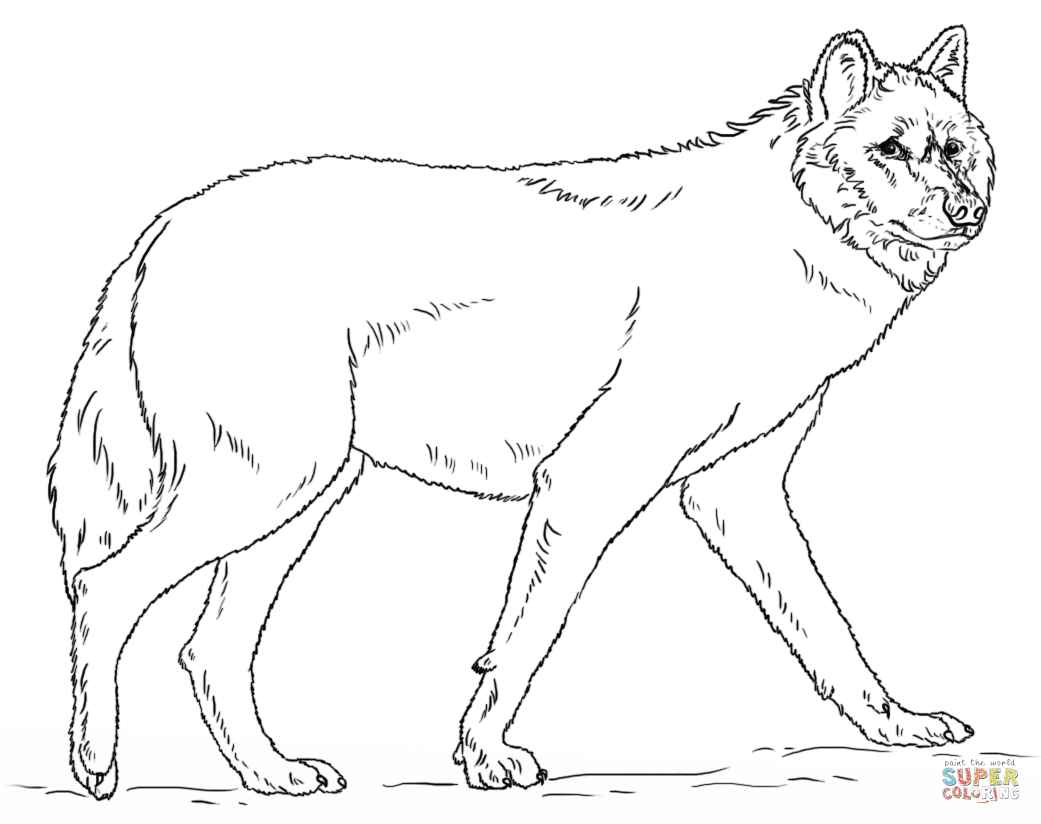 Realistic Grey Wolf coloring page | Free Printable ...