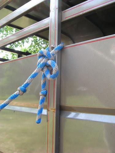 Rinnah's first horseman's knot!
