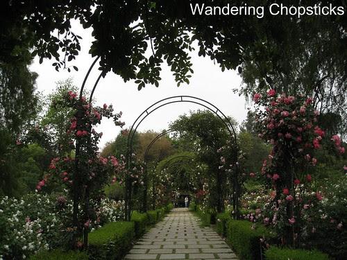 The Huntington Library, Art Collections, and Botanical Gardens (Rose Garden) (Spring) - San Marino 10
