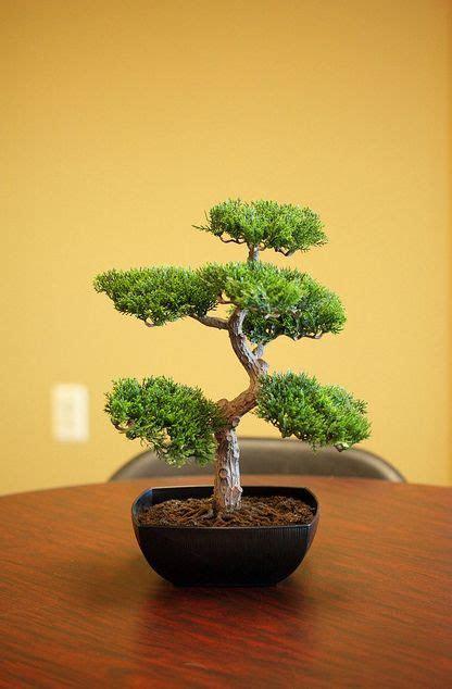Bonsai Trees for centerpieces   Bridal & Baby   Garden
