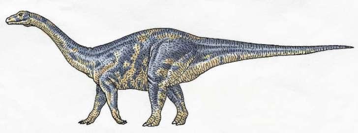 Adult Lufengosaurus Credit:  DK Images