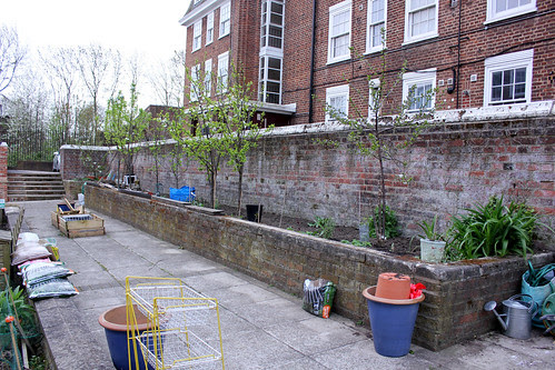 Fruit tree border 28 April