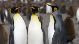 KDE Connect 1.0: Den Linux-Desktop per Smartphone steuern