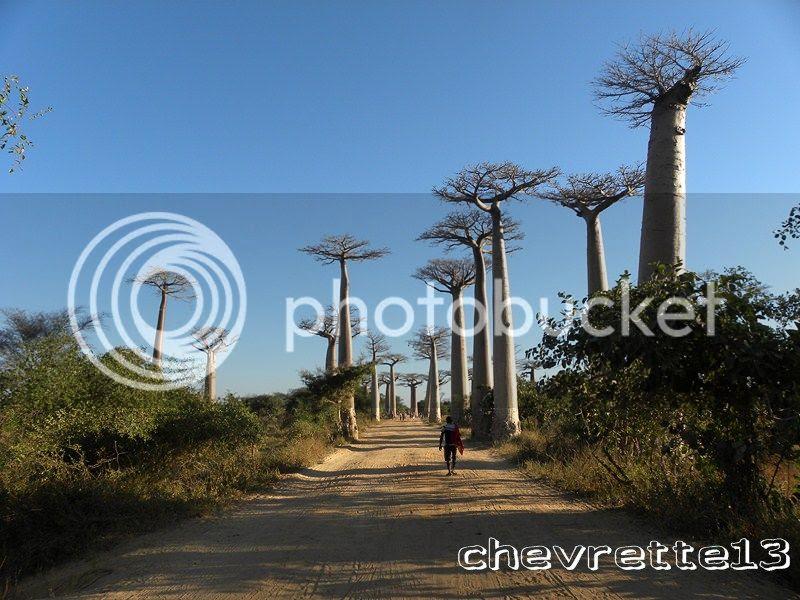 http://i1252.photobucket.com/albums/hh578/chevrette13/Madagascar/DSCN2438Copier_zpsefd0f492.jpg