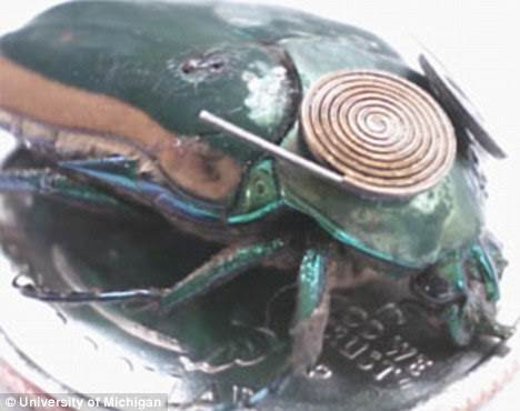 Cyborg insect: This green june beetle is fitted with a tiny motion generator to produce electricity. This could be used to power a camera and a microphone