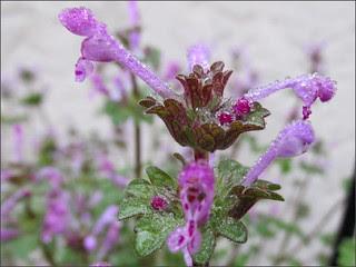 Tiny drops on tiny flowers