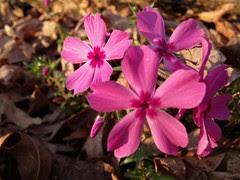 flowers by Teckelcar