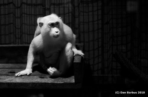 Infrared monkey