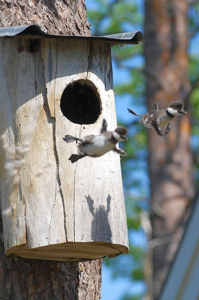 birds, babies flying via tim l.  wonderful