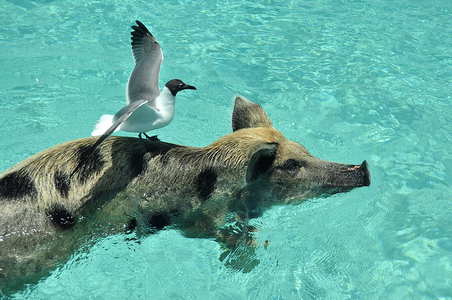Piggy-back ride!!