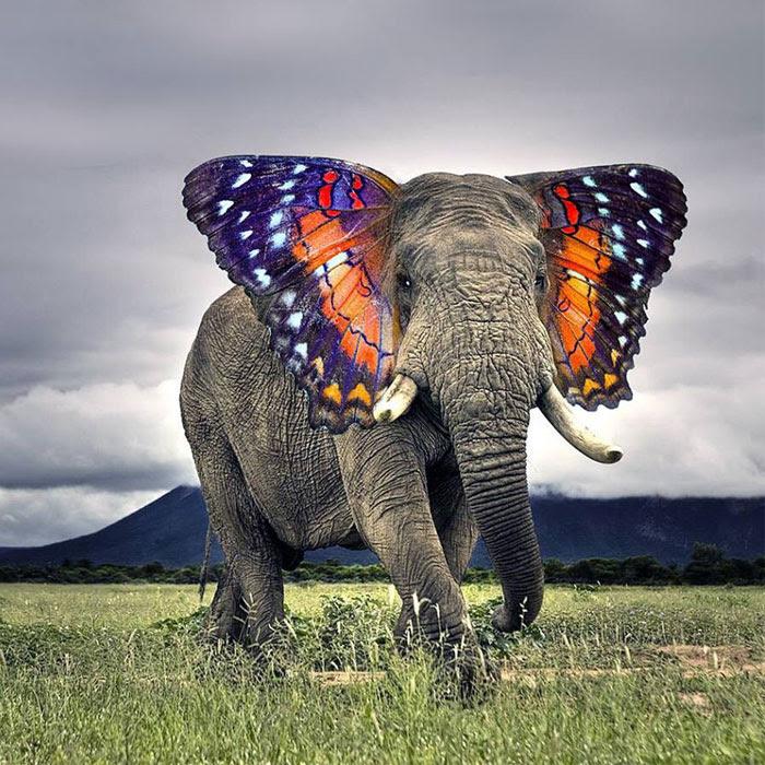 15 Extraños animales híbridos creados con photoshop