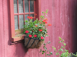 Galen's flowers