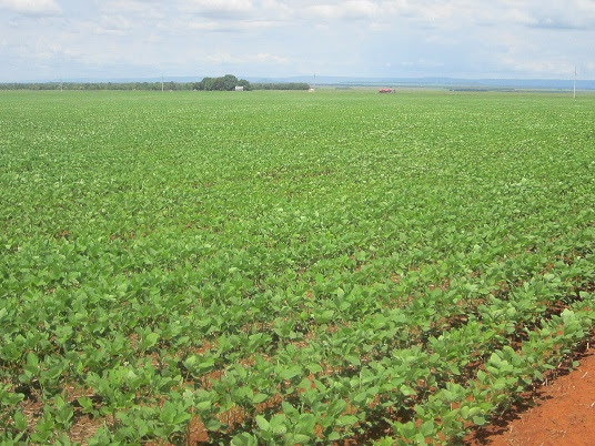 A sea of soy is seen near the city of Porto Nacional, on the right bank of the Tocantins River. The expansion of soy in Tocantins resurrected the North-South Railway, designed in the 1980s with the abstract objective of integrating railway lines east to west, crossing the centre of Brazil, which had little production at that time. Credit: Mario Osava / IPS