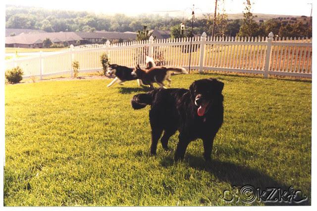 Booter & his herd of huskieskzk