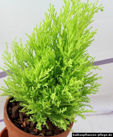 Balkonbepflanzung ganzj hrig bar n ki isel blo u for Glasvase bepflanzen