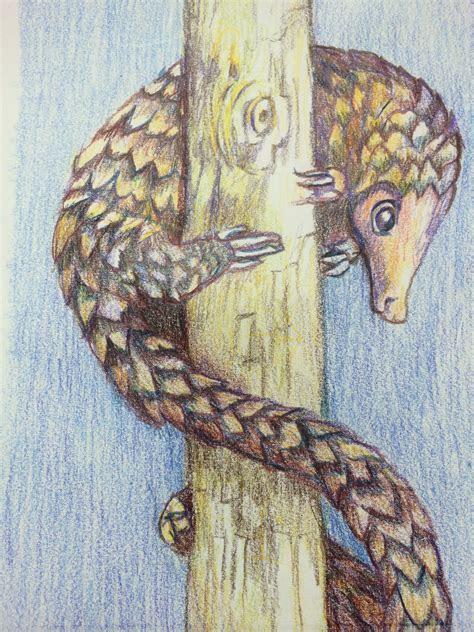 pin  mia rudolph  pangolin animals pencil drawings