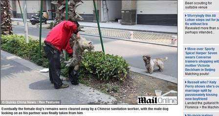 A cadela foi retirada da calçada