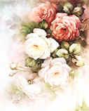 Le rose di Sonie Ames