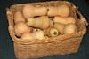 buttternut squash harvest