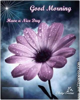 Download Nice Day Good Morning Good Morning Wallpapers Mobile Version