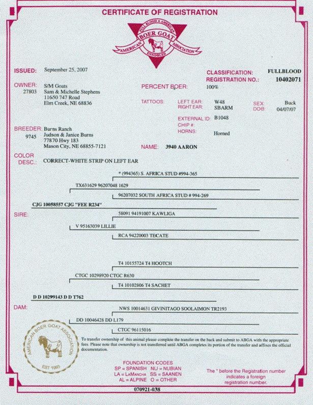 sertifikat kambing boer