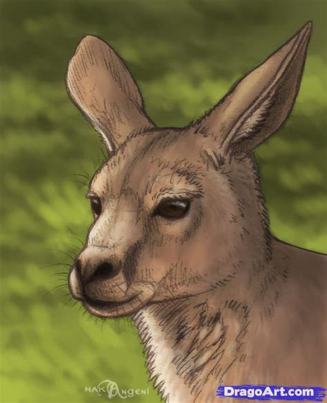 How to Draw Kangaroos, Step by Step, desert animals, Animals, FREE Online Drawing Tutorial