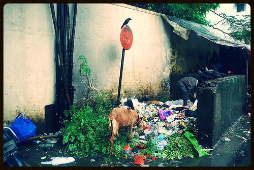 Filthy Places Of Bandra Guided Tour ...The Garden Of Chinchpokli Road by firoze shakir photographerno1