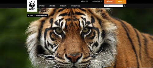 WWF Website by Megan Lorenz
