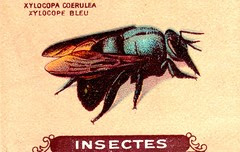 insecte 9