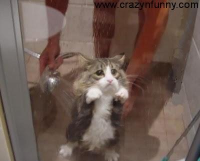 Cute Cat Pictures Crazy N Funny Com