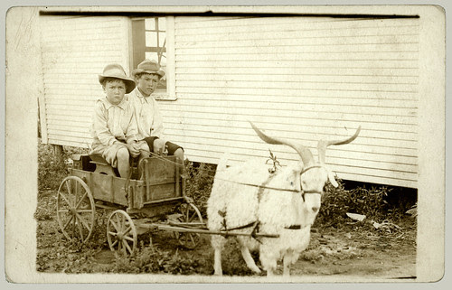 Two boys in a goat cart