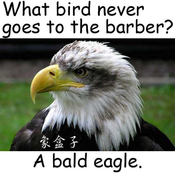 bald eagle barber
