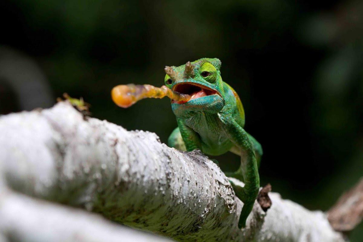 Nature Conservancy: as 20 melhores fotos da Natureza de 2013 04