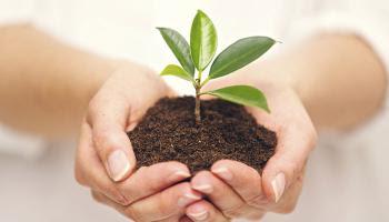 वैज्ञानिकों ने विकसित किया इलेक्ट्रॉनिक पौधा, विज्ञान के क्षेत्र में नए युग की शुरुआत