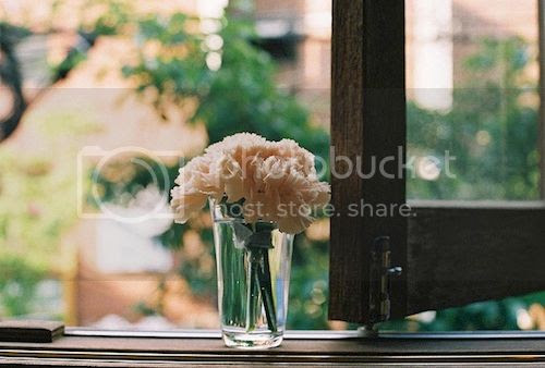 LE LOVE BLOG LOVE PHOTO IMAGE PICS ROSES IN A VASE CANCER LOSS STORY HIBI BY OLE FLICKR photo LELOVEBLOGLOVEPHOTOIMAGEPICSROSESINAVASECANCERLOSSSTORYHIBIBYOLEFLICKR_zpsda2995f2.jpg