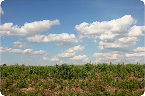 landscape web.jpg