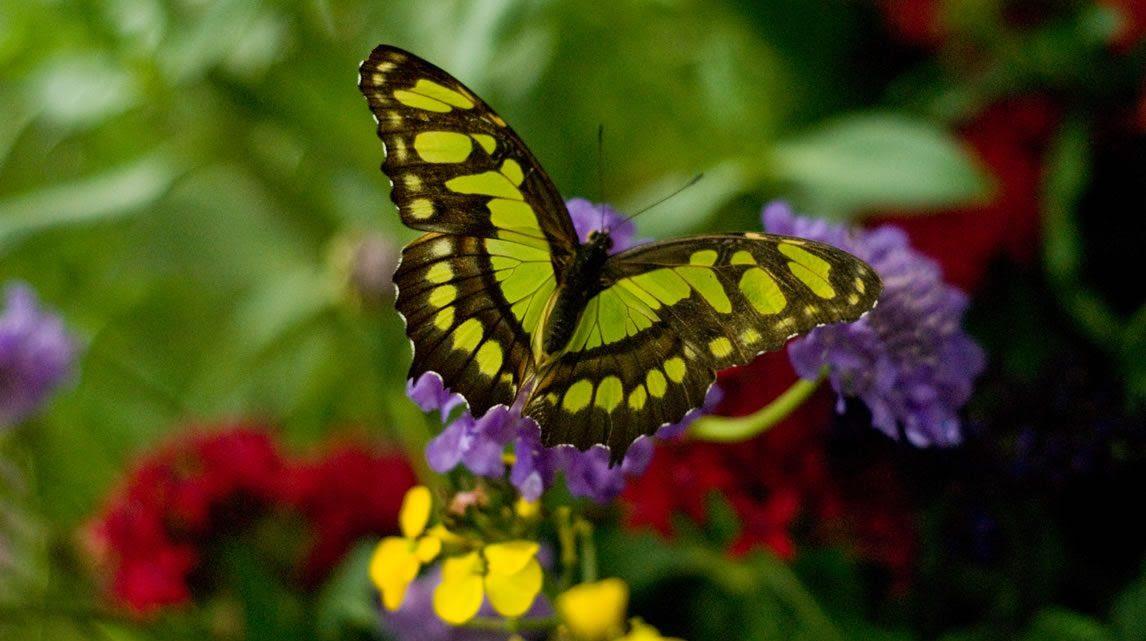 Lujoso Diseños Del Arte Del Uña De La Mariposa Elaboración - Ideas ...
