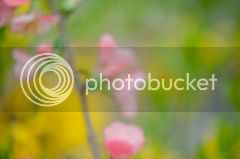 photo spring3_zps86784923.jpg