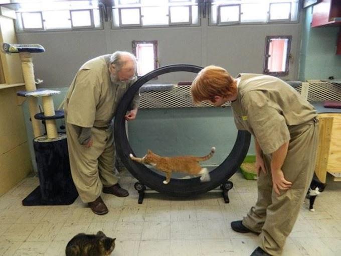 Gatitos de un refugio van a una prisión pero su misión es más grande de lo que muchos imaginan