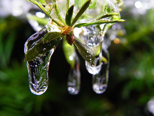 Ice Rain (3)