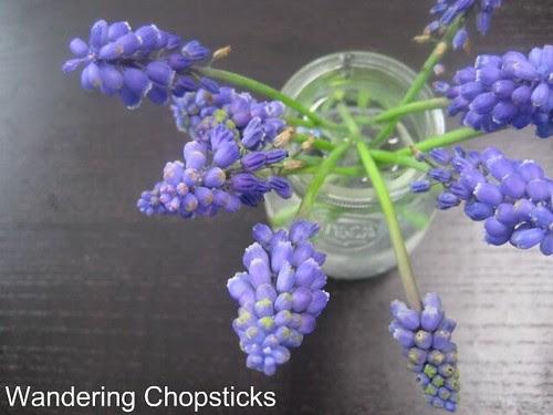 3.18 Grape Hyacinth 1