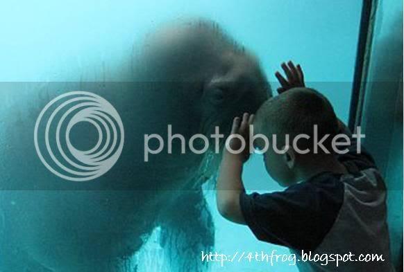 walrus, mind meld