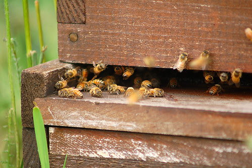 Bees! by theseanster93, on Flickr