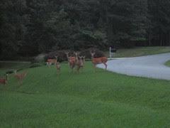 Deer by Teckelcar