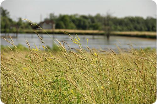 Grasses Web.jpg