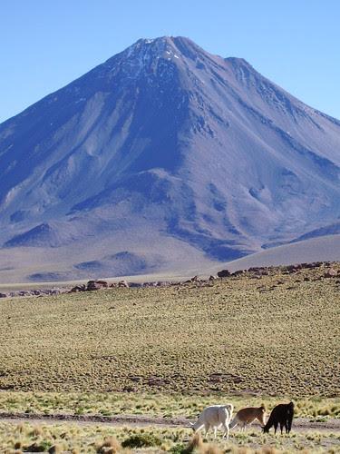 Llamas and mountains
