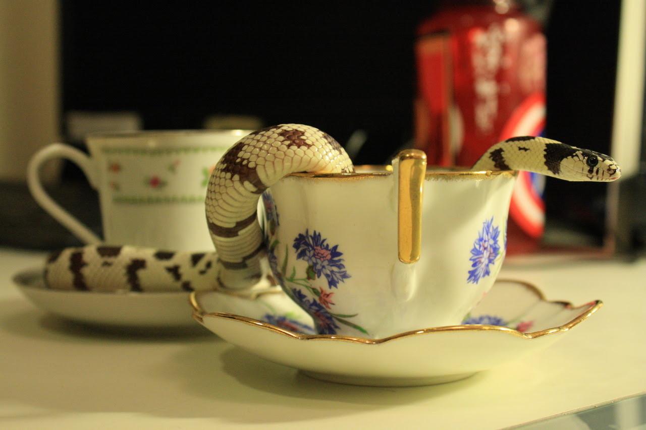 crisscrosscutout, snake, tea, photograph