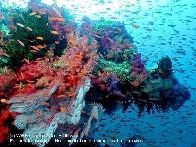 Oceanos já estão até cem vezes mais ácidos devido a emissões de CO2
